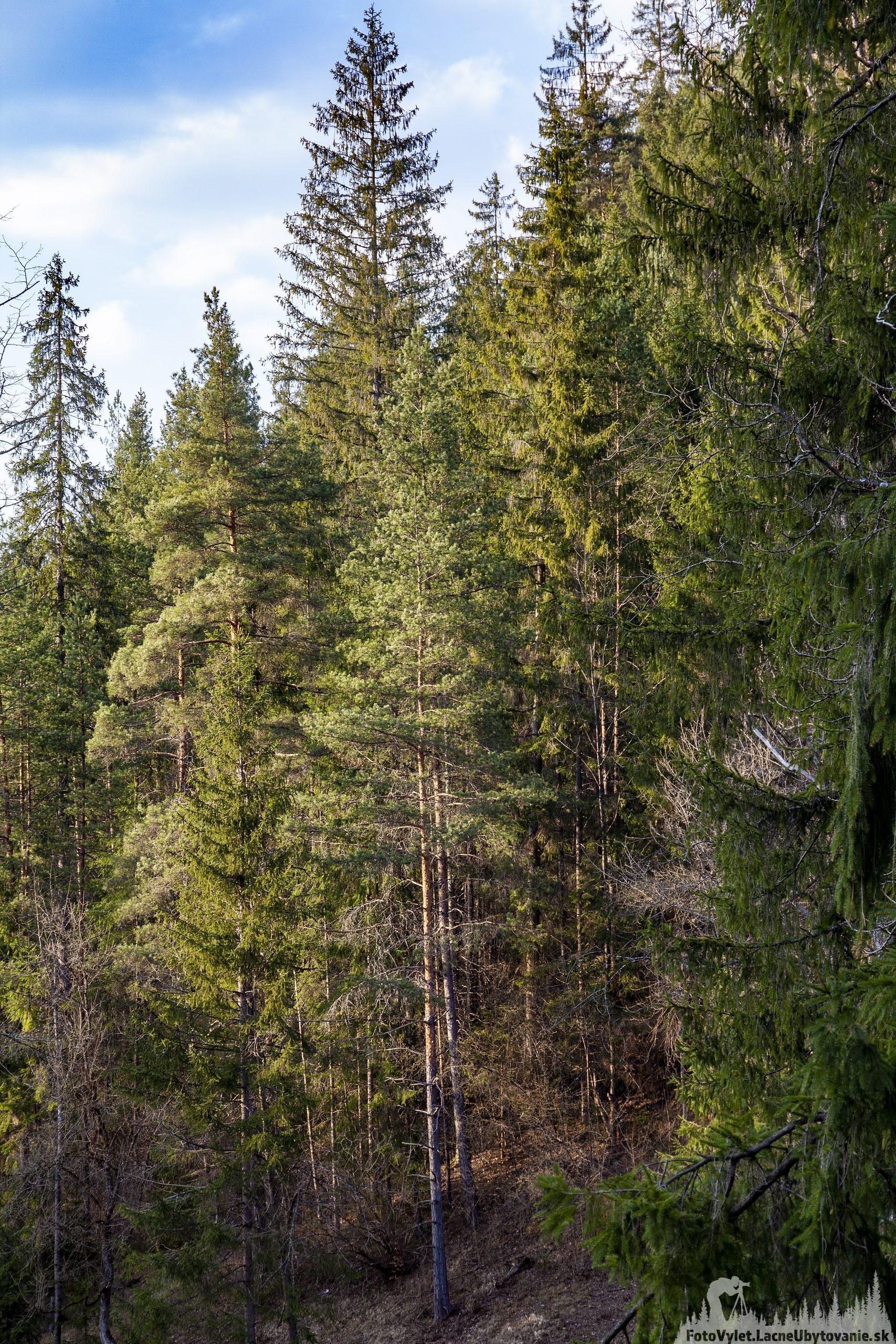 Kúpele Brusno blízky les